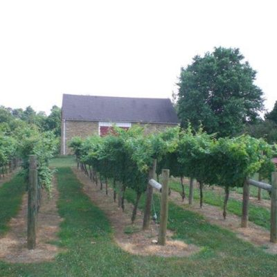 vineyard5.jpg